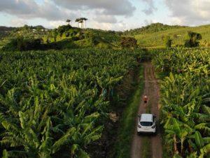 Voiture sur un chemin en Martinique