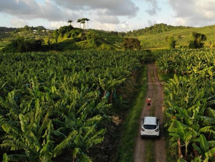 Road trip express en Martinique : par où commencer ?